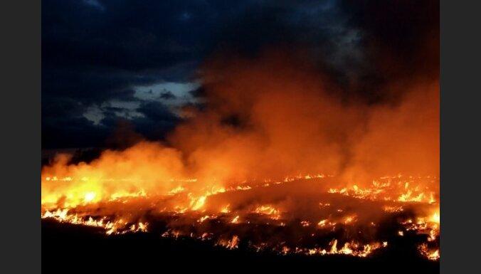 В Курземе горело 1400 квадратных метров старника