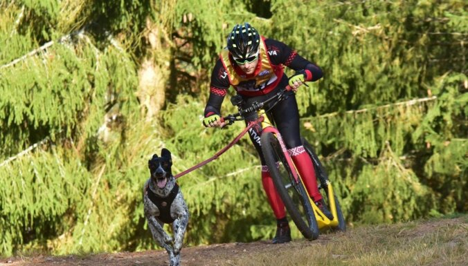 Latvijai atkal piešķirts Pasaules kausa posms kamanu suņu sportā