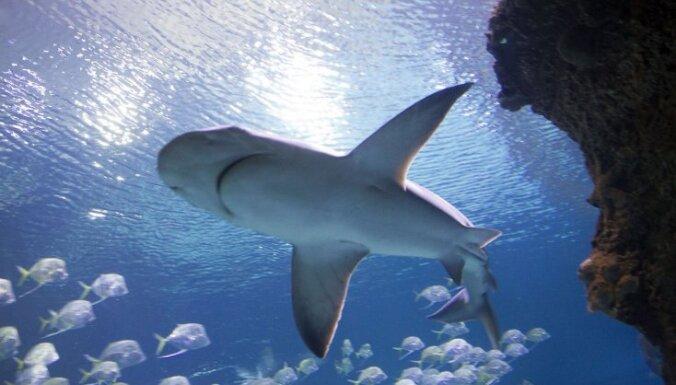 Видео: Туристы стали свидетелями нападения 70 акул на кита