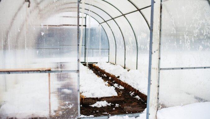 Kāpēc siltumnīcā vajag sabērt sniegu