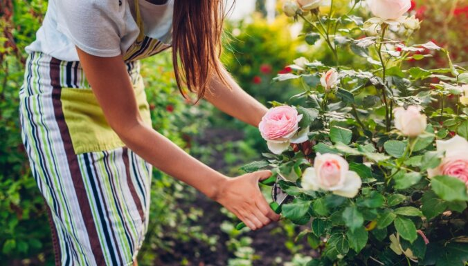 Puķu dārzs jūlijā: ko vēl iesēt, pārstādīt vai nogriezt