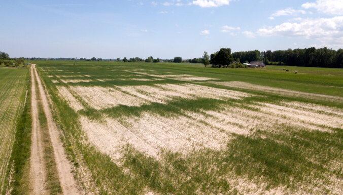 Rucavā lūgs izsludināt ārkārtējo situāciju lauksaimniecībā, tomēr ne visās jomās situācija ir kritiska