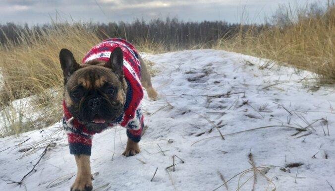 Naktī Latvijas lielāko daļu pārklās sniegs
