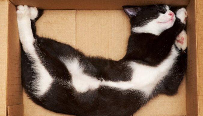 Ar Covid-19 saslimušais kaķis citus neapdraud, uzsver 'Bior' vadītājs