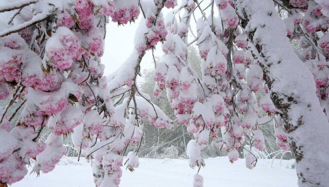 В Бауске и Даугавпилсе побит рекорд самого позднего снега весной