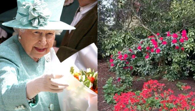 Bekingemas pils publisko vēl neredzētu video no karalienes Elizabetes dārza
