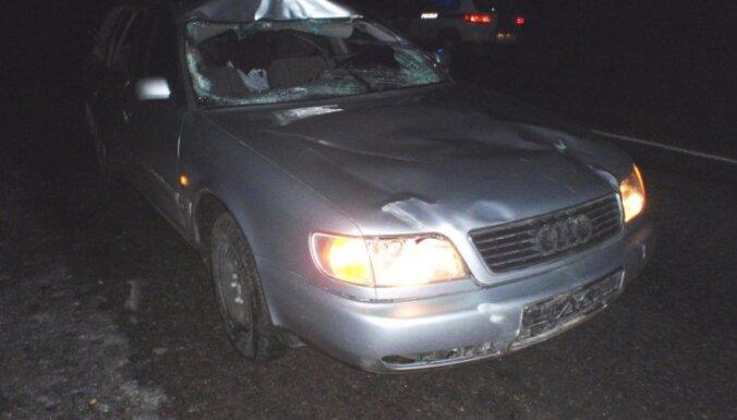 Audi столкнулся с лосем: пострадали два человека