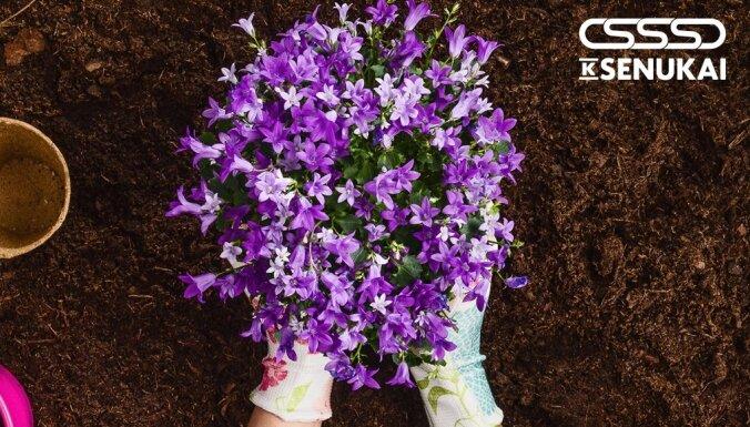 Арсенал садовода: минимальный набор садового инвентаря