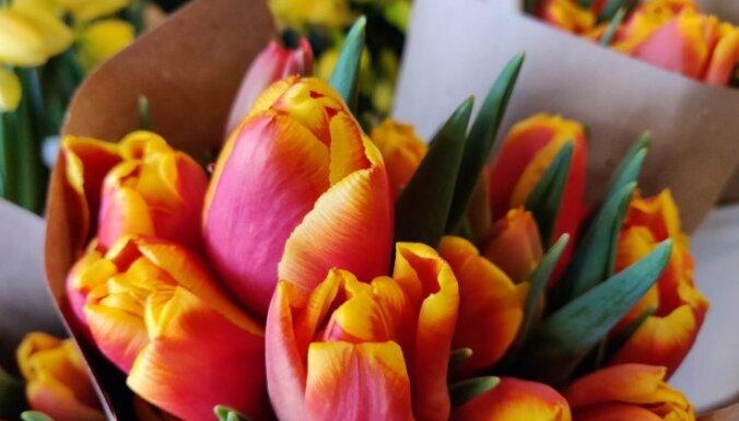 Pavasaris vāzē – kā parūpēties par grieztajām hiacintēm, tulpēm un narcisēm