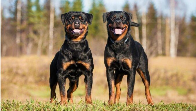 Топ-10 лучших сторожевых пород собак
