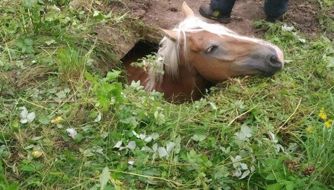 Glābējiem nākas palīdzēt Daugavpilī bedrē iekritušam zirgam