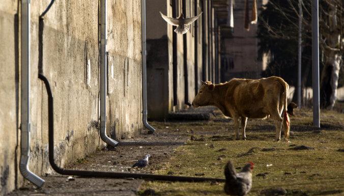 Bitkoinu fermas paralizē Abhāzijas elektrotīklus