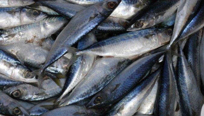 Как засолить рыбу в домашних условиях: 5 рецептов