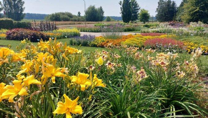 Bulduru mazā Rundāle: ziedu košumi digitālajā dārzā