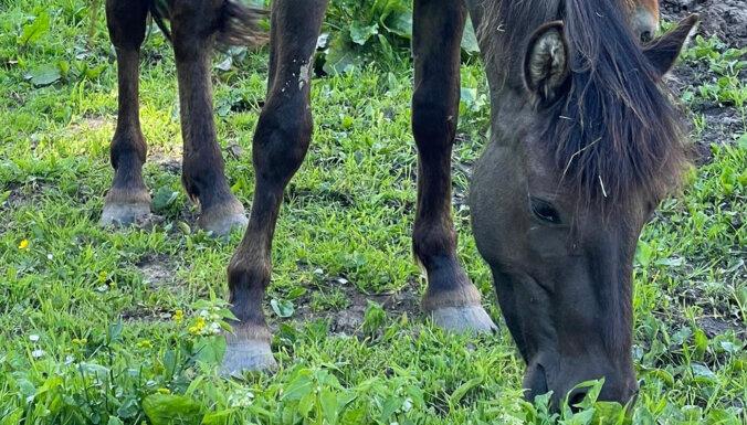 В Ропажском округе пропала беременная пони