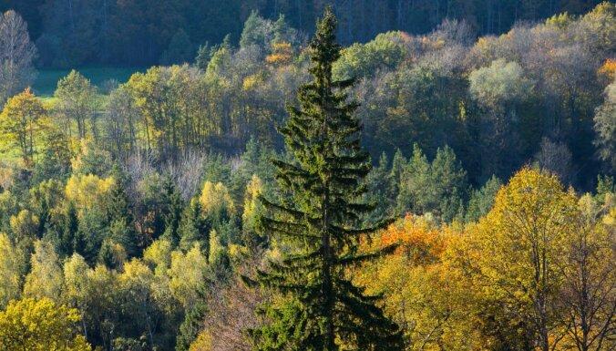 Gaujas nacionālajam parkam plāno piešķirt 48 871 eiro negaisa postījumu novēršanai