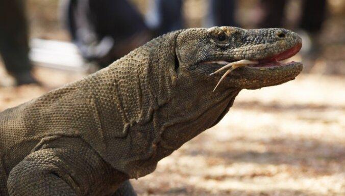 Гигантский варан возглавил топ-10 самых популярных рептилий