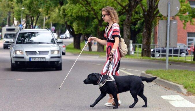 Вместо глаз — собака: как обучают четвероногих поводырей