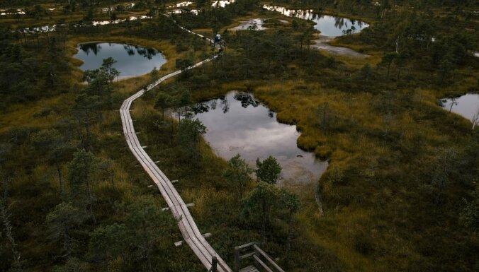 ФОТО. Лучшее место для осенних прогулок: Тропа Большого Кемерского болота