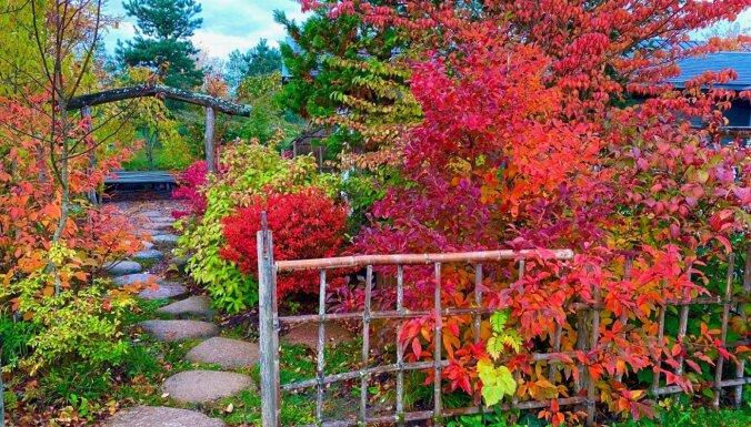 ФОТО. Осенняя красота: как выглядит настоящий японский сад на севере Литвы