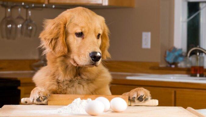 Vai mājdzīvniekiem var dot olas