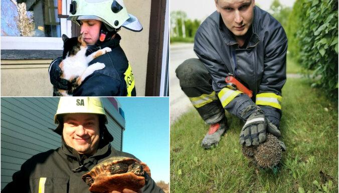 Šogad ugunsdzēsēji glābēji vairāk nekā 600 reizes steiguši palīdzēt dzīvniekiem