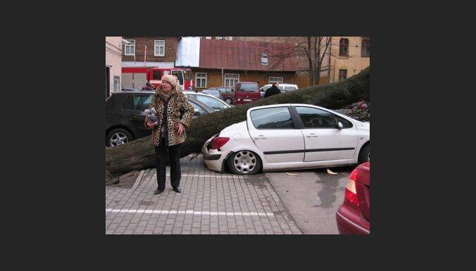 В Риге дерево раздавило Peugeot (фото)