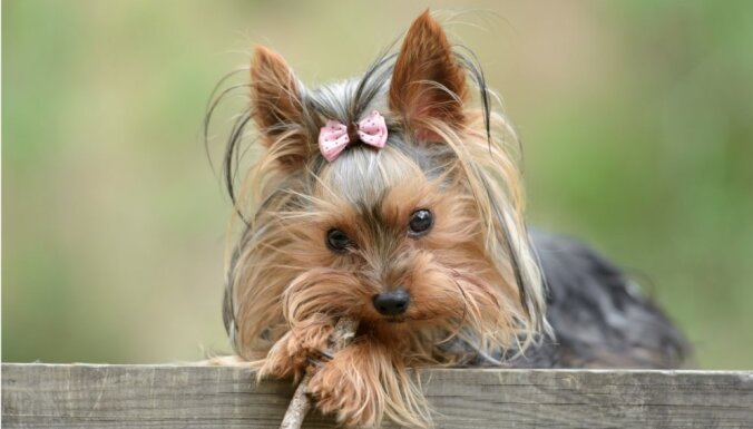ТОП 10: самые популярные в Латвии породы собак