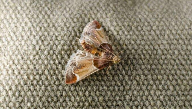 Как избавиться от моли в доме: народные методы