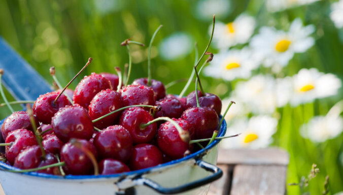 Семь хозяйств в Латвии, где самим можно собрать вишню, малину, смородину и чернику