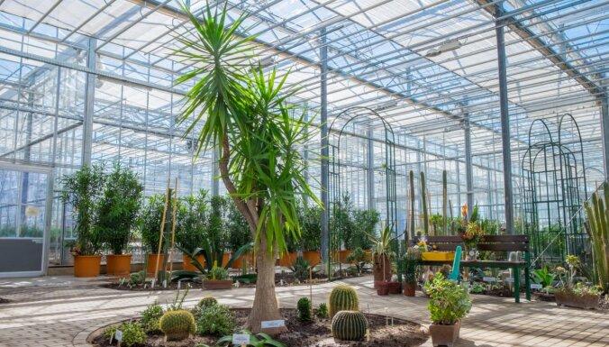 12. jūnijā Nacionālajā botāniskajā dārzā varēs iegādāties telpaugus; notiks arī gadatirgus