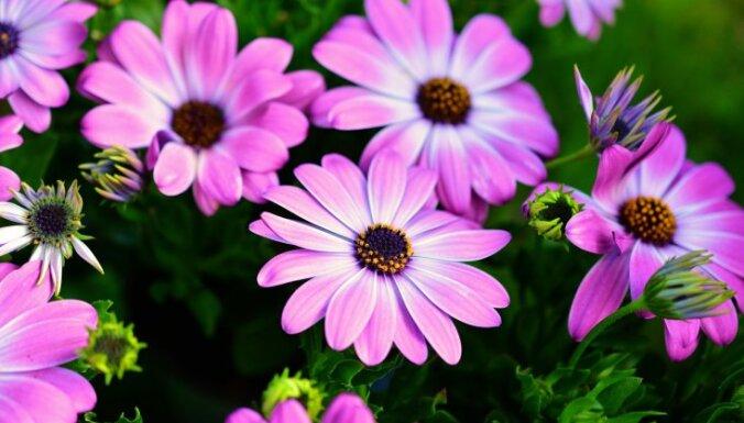 Низкорослые цветы для дачной клумбы, которые цветут все лето
