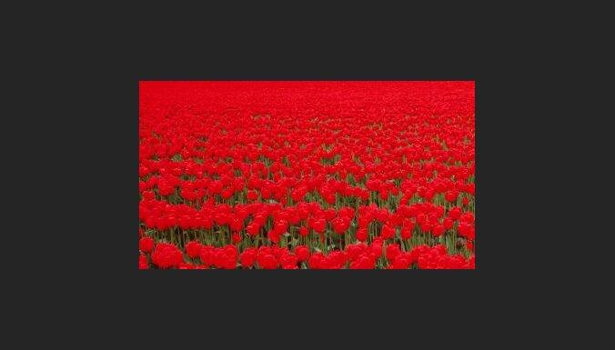 На Ратушной площади будет ковер из цветов