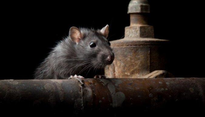 Франция: на судне во время травли грызунов погиб кок, команду набирала латвийская компания