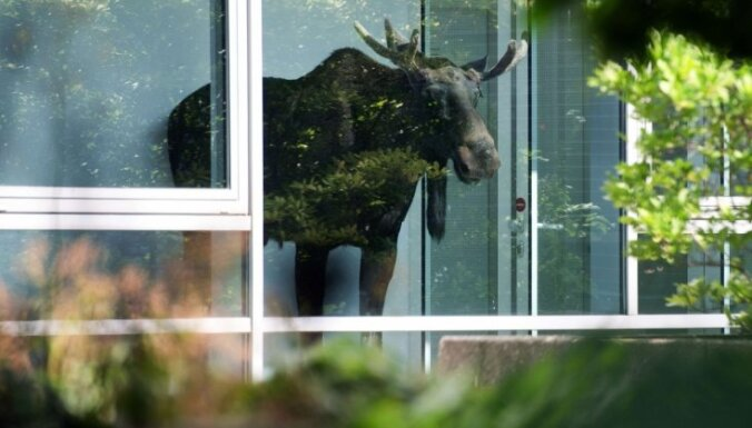 В центре Хельсинки лось выбросился из окна банка