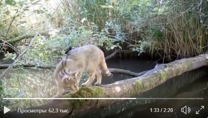 ВИДЕО. Благодаря ученым бревно в лесу прославилось на весь интернет