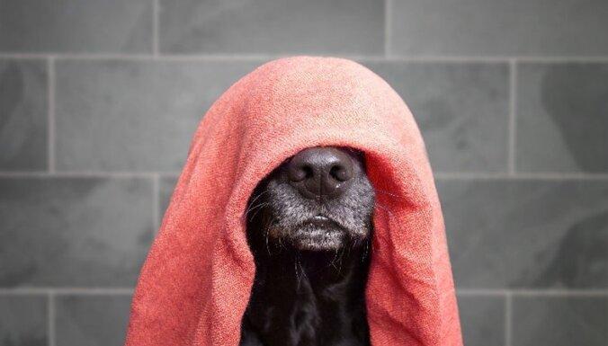 Шаг за шагом: как правильно мыть собаку?