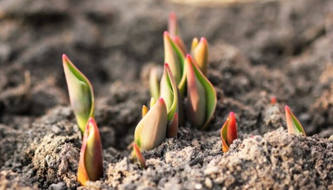 Kas darāms dārzā un pagalmā līdz 8. aprīlim