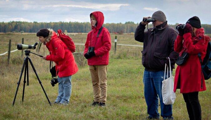 Lielgalvis un citi reti ciemiņi: ornitologu bagātīgā 'raža' Putnu dienās Latvijā