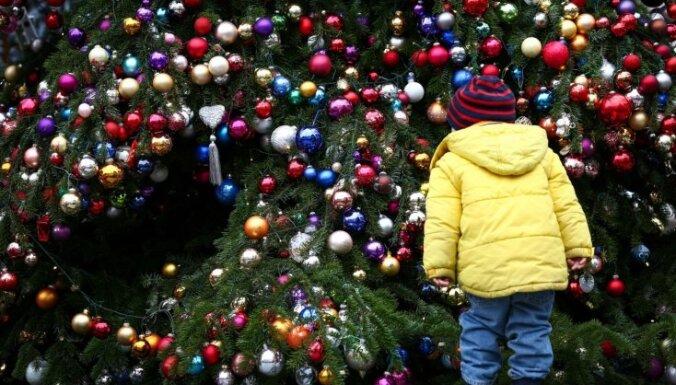 Жители Тукумса недоумевают: дума за 3500 евро привезла рождественскую ель из Клайпеды