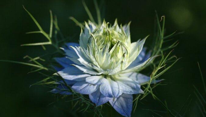 Две недели не предел: 13 самых стойких срезанных цветов
