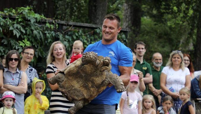 Foto: Daumants Dreiškens Rīgas zoo sver Galapagas bruņurupučus