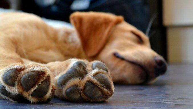 Полиция задержала стрелка, убившего собаку, забежавшую к нему во двор