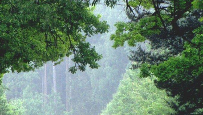 Владельцы леса претендуют на евроденьги