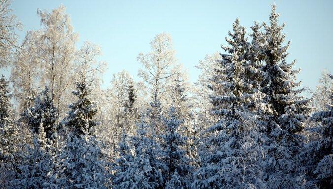 В Латгале и Видземе к утру наметет до 15 см снега, под его весом начнут ломаться деревья