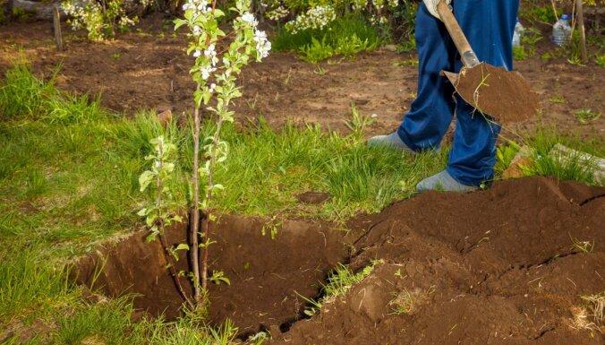 Video: Kāpēc mēdz neieaugt pavasarī stādītie augļu koki
