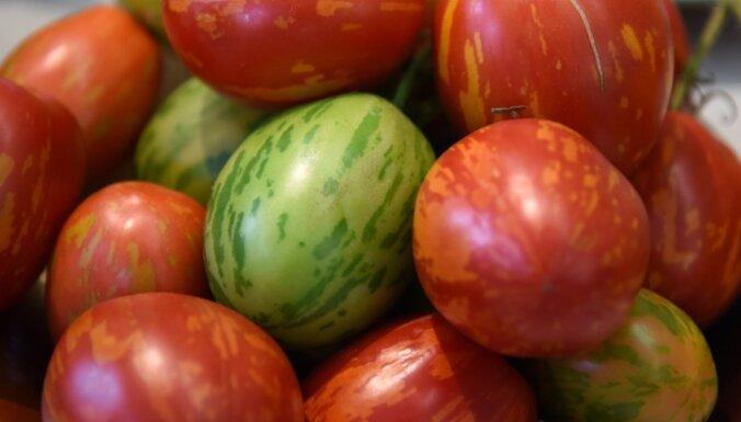 Через границу не пропустили 14 тонн томатов