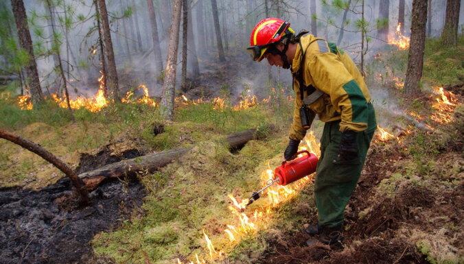 Greenpeace зафиксировала рост лесных пожаров в Сибири