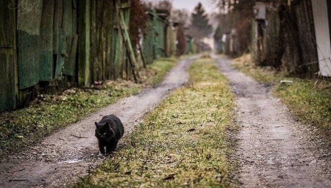 Ieskatīties pamestam kaķim acīs: fotogrāfs no Rīgas iemūžinājis murrātājus nomaļos mazdārziņos