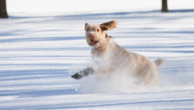 Kuldīgā glābēji no ledus krastā nogādā suni